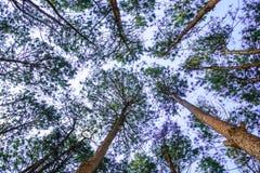 Opinión superior del árbol foto de archivo libre de regalías
