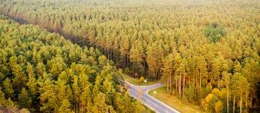 Opinión superior del bosque Imágenes de archivo libres de regalías