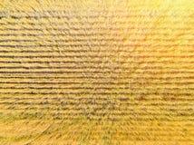 Opinión superior del campo de trigo Fotos de archivo