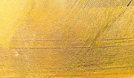 Opinión superior del campo de trigo Fotografía de archivo