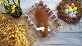 Opinión superior del conejo de pascua de la celebración del concepto tradicional mullido del símbolo que se sienta en una caja almacen de video