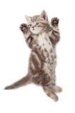 Opinión superior del gato divertido del gatito que miente en la parte posterior aislada imagenes de archivo