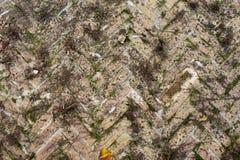 Opinión superior del pavimento Imagen de archivo