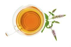 Opinión superior del té de la hierbabuena Imagenes de archivo