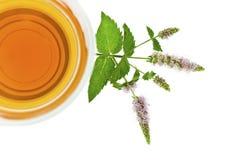Opinión superior del té de la hierbabuena Foto de archivo libre de regalías