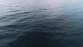 Opinión superior delfínes salvajes tiro Propósito superior de sorprender saltar salvaje de los delfínes del mar azul Vida salvaje almacen de metraje de vídeo