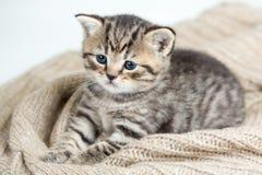 Opinión superior el gatito del gato que miente en jersey Imagenes de archivo