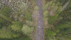 Opinión superior el grupo de turistas que caminan a lo largo de rastro del bosque clip El grupo de turistas va al top de la monta almacen de metraje de vídeo