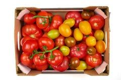 Opinión superior fresca de los tomates rojos, amarilla y verde en caja en un fondo blanco Aislado Imagen de archivo libre de regalías