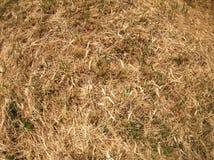 Opinión superior la hierba seca en el prado Fotos de archivo libres de regalías