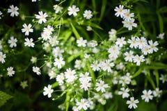 Opinión superior las flores salvajes blancas y la hierba verde fotografía de archivo