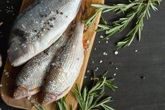 Opinión superior los pescados crudos frescos del dorada en un tablero de madera con una puntilla del romero en una tabla negra fotos de archivo
