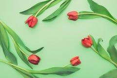 Opinión superior los tulipanes rojos de la primera primavera en fondo verde claro con el espacio de la copia Imagen de archivo libre de regalías