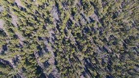 Opinión superior sobre bosque del spruse almacen de metraje de vídeo