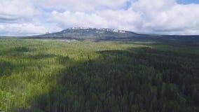 Opinión superior sobre bosque y la montaña verdes densos con nieve en el pico clip Bosques densos en la ladera con el top coronad metrajes