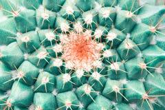 Opinión superior sobre el cactus foto de archivo