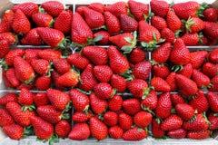 Opinión superior sobre filas de los paquetes de fresas jugosas para la venta en el mercado griego Foto de archivo