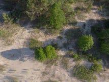 Opinión superior sobre la costa costa del bosque al mar Foto de archivo