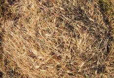 Opinión superior sobre la hierba seca de la tierra Foto de archivo