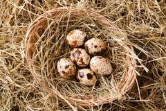 Opinión superior sobre una jerarquía de la paja con cinco huevos de codornices Fotos de archivo libres de regalías