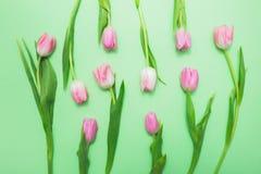 Opinión superior tulipanes rosados frescos en fondo verde claro Fotos de archivo