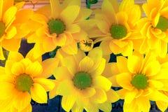 Opinión superior y foco selectivo en el flawer amarillo de chrys hermosos Fotografía de archivo libre de regalías