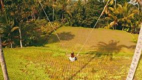 Opinión trasera aérea la mujer en el balanceo sobre fondo hermoso de los campos del arroz almacen de video
