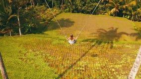Opinión trasera aérea la mujer en el balanceo sobre fondo hermoso de los campos del arroz metrajes
