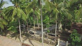 Opinión tropical 4k aéreo de la isla de palma de la piscina de la muchacha almacen de metraje de vídeo