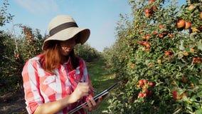 Opinión un granjero o un agrónomo de sexo femenino joven del negocio que trabaja en el jardín de la manzana, usando la tableta di metrajes