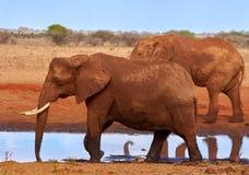 Opinión varios elefantes africanos en la sabana en safari en Kenia - África imagen de archivo