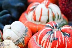Opinión verde blanca roja rayada de la macro de las calabazas Fondo del día de la acción de gracias de Halloween Todavía cosecha  Fotos de archivo