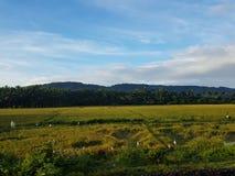 Opinión verde de Kerala de la montaña de Paisajes del tren Imagen de archivo