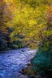 Opiniónes a lo largo del rastro de la enredadera de Virginia durante otoño imagen de archivo libre de regalías