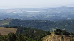 Opiniões da uva de Sonoma County foto de stock