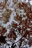 Opiniões de árvore bonitas quando visto de baixo de fotografia de stock