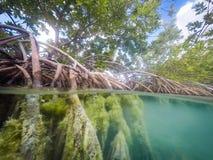 Opiniões de Curaçau dos manguezais Imagens de Stock Royalty Free