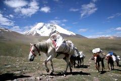 Opiniões de Himalaya Foto de Stock