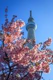 Opini?n de Sakura fotos de archivo libres de regalías