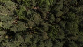 Opini?n del ojo de p?jaro del tiro a?reo del bosque verde hermoso Visi?n a?rea 4K La c?mara vuela sobre el bosque con?fero almacen de video