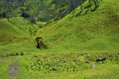 Opini?n esc?nica de campo de hierba verde de los campos de granja rodantes del verde del campo con el caballo imagen de archivo