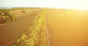 Opini?n a?rea de UHD 4K Vuelo bajo sobre campo rural y hilera de ?rboles del trigo verde y amarillo almacen de metraje de vídeo