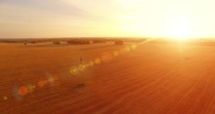 Opini?n a?rea de UHD 4K vuelo del Mediados de-aire sobre campo rural del trigo amarillo almacen de metraje de vídeo