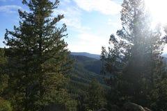 Opini?o Rocky Mountains em Denver Pinheiros bonitos no primeiro plano imagens de stock royalty free