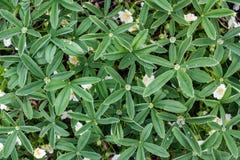 Opini?o superior da textura verde fresca das folhas fotos de stock