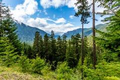 Opinión alpina del prado del valle de la montaña cerca del Monte Rainier, Washington Imagen de archivo