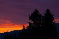 Opinión de la puesta del sol y dos árboles de pino Fotografía de archivo libre de regalías