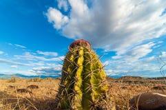 Opinión del cactus del primer Fotos de archivo