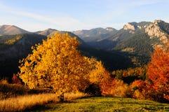 Opinión del otoño Foto de archivo