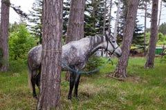 Opinión el caballo que pasta Fotos de archivo libres de regalías
